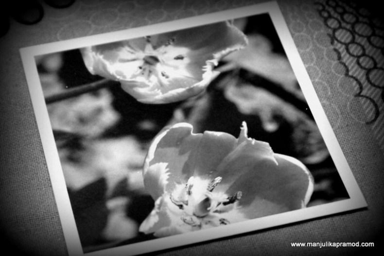 Travel photos, Photojaanic