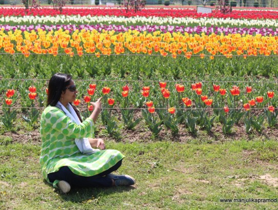Enjoy the Magnificent Tulip Festival of Kashmir with Family