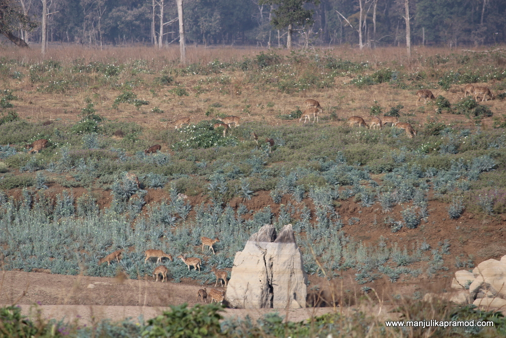 Jungle safari -Pench