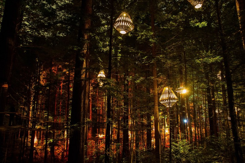 New Zealand, Redwood Nighlights, Trenz