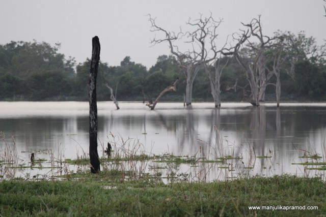 Wilderness of Sri Lanka
