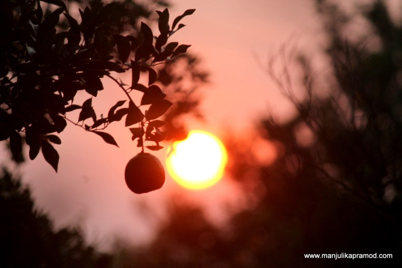 The orange orchards of Chhindwara