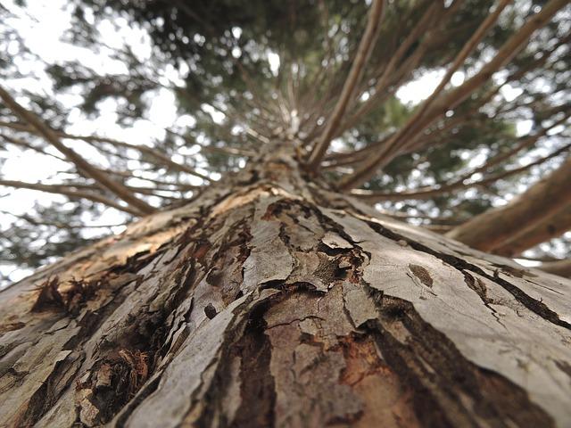 tree-102809_640