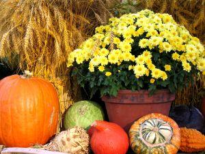 thanksgiving-arrangement-2-1229576-m