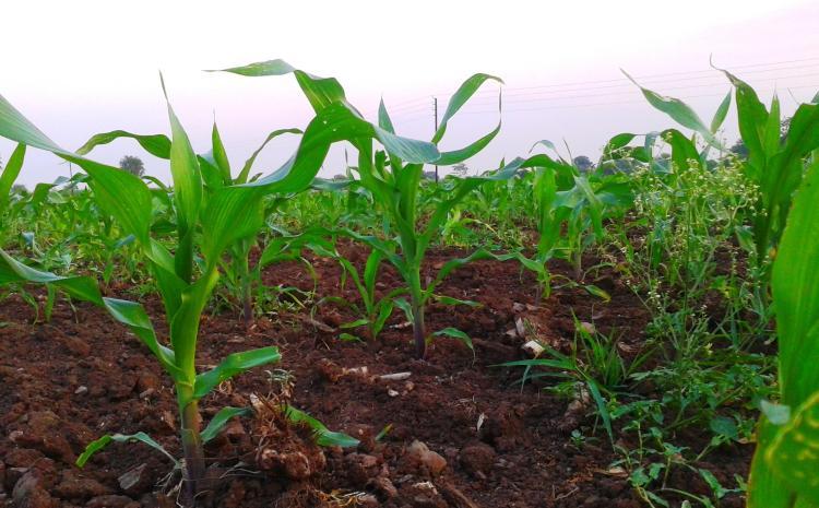 Creating Healthy Soil Workshop