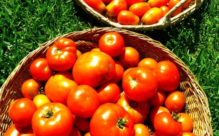 Tomato Time!