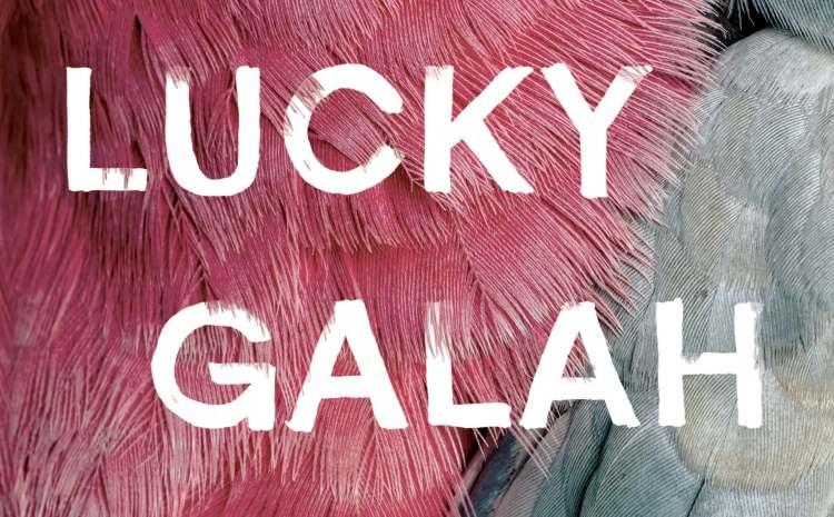 THE LUCKY GALAH