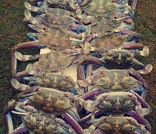 Corps de Crab Ballet!