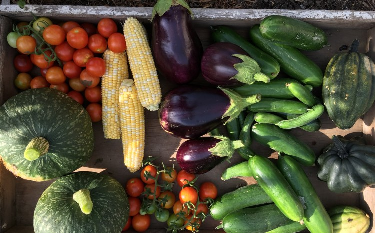 Our top 10 vegetables to plant in Spring
