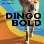 Dingo Bold