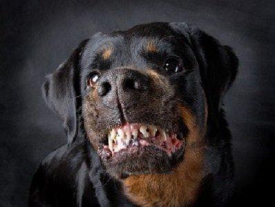 NH dog bite lawyer
