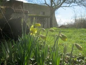 Jonquilles- Grand gite de groupe dans le Lot et Garonne