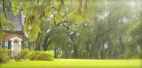 Welcome To Mansfield Plantation Georgetown South Carolina