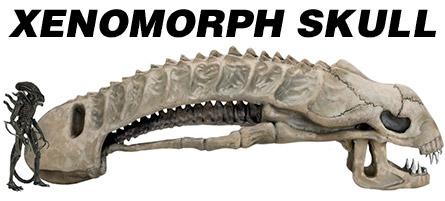 Xenomorph Skull