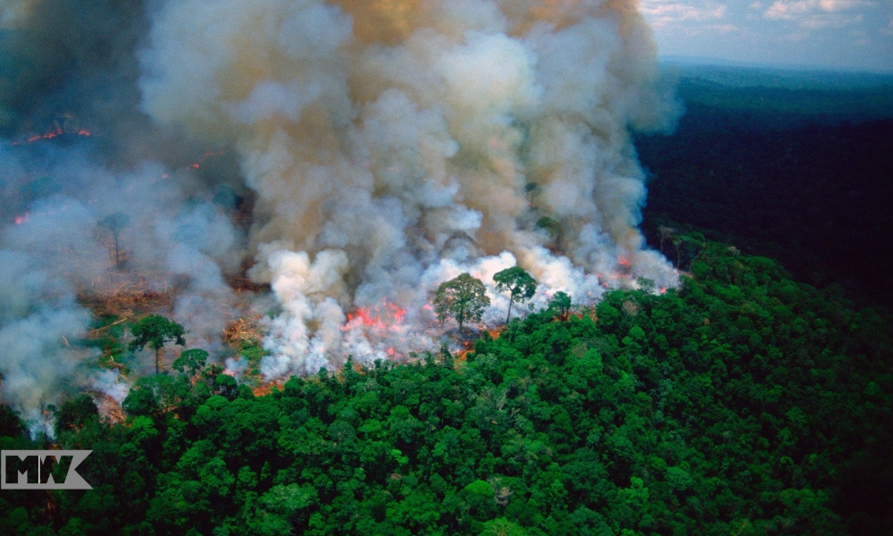 G-7 Countries Will Be Donating $22 Million To Fight Amazon Wildfires