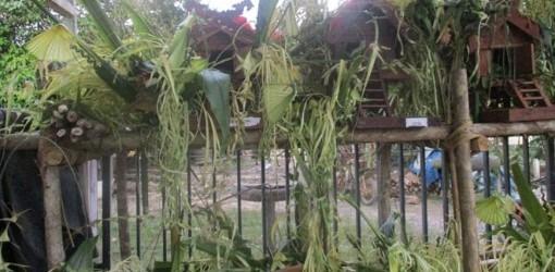 Gambar yang terkait dengan Rumah Adat Daerah Kalimantan Timur