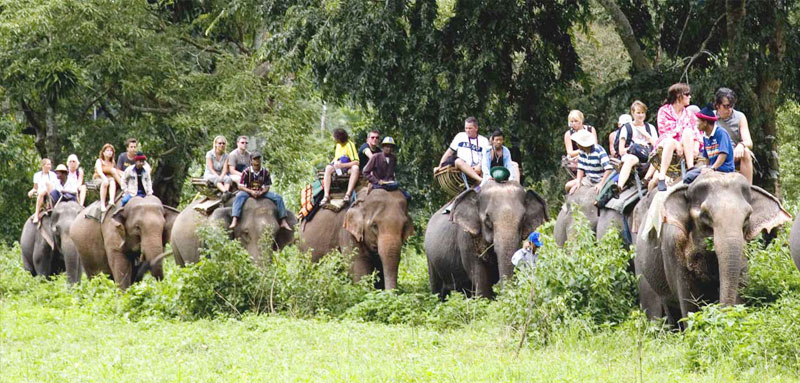 Jungle Safari Tours in Nepal