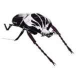 Papercraft imprimible y armable del Escarabajo Goliat / Goliath Beetle. Manualidades a Raudales.
