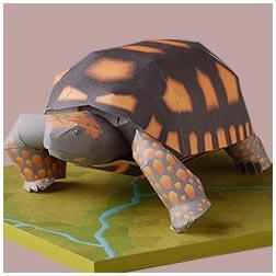 Papercraft de una tortuga de patas amarillas. Manualidades a Raudales.