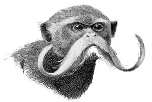 Manuche Postcards from - Mr. Moustache