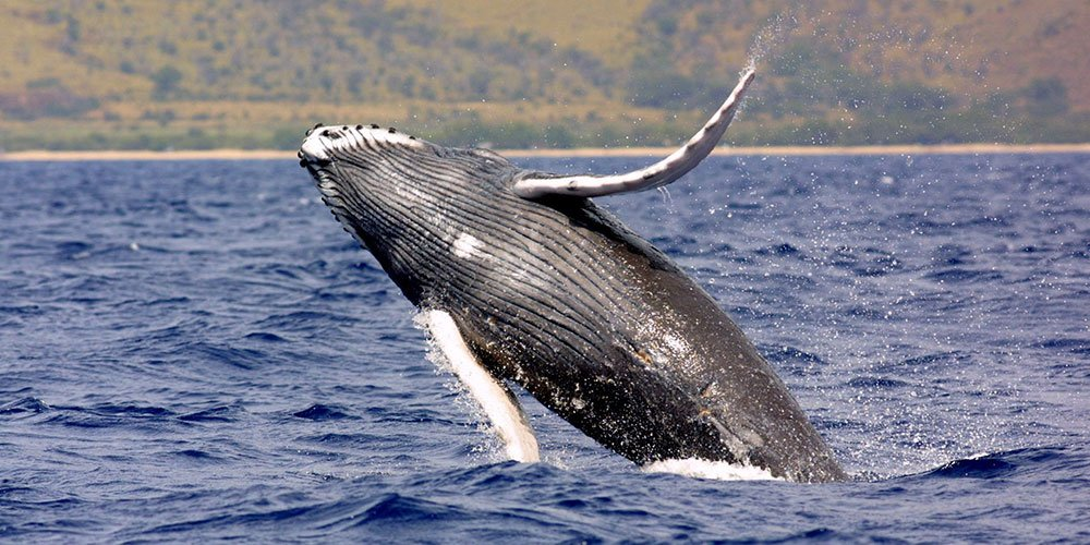 Dolphin & Whale Watching Costa Rica Tour