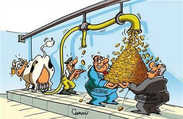 Vaca, productor, industria y distribuidor