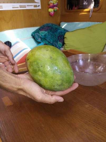 Mangue achetée aux îles Canaries