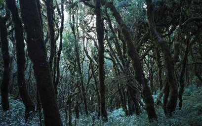 Promenade dans la laurisylve sur La Gomera.