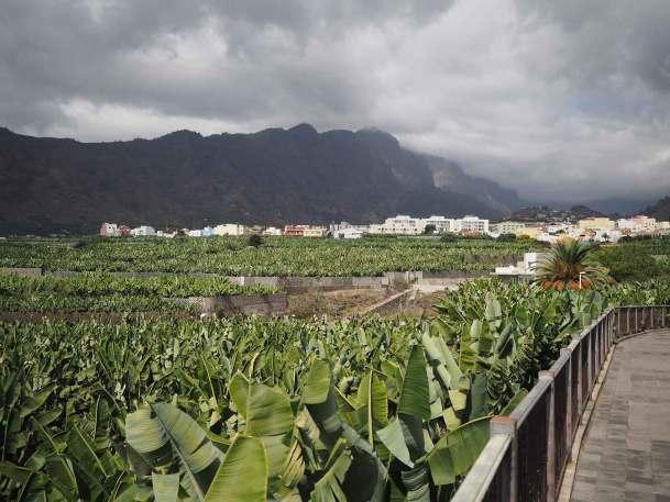 Plantations de bananiers sur l'île de La Palma, aux Canaries