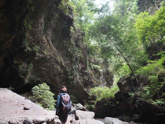 Au coeur de la forêt près de la cascade de Los Tilos.