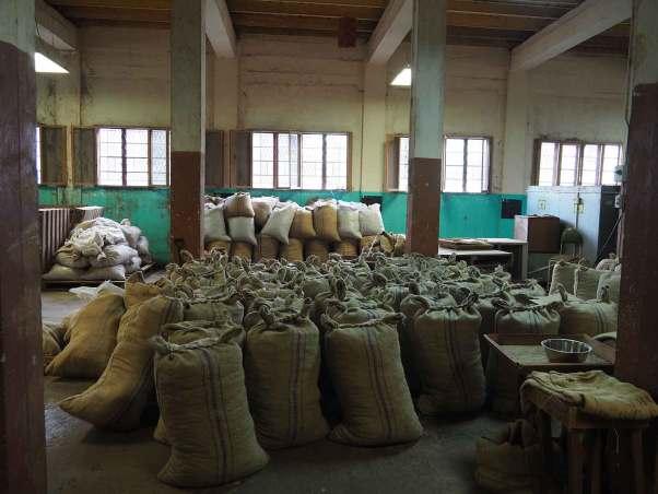 Stockage des noix de muscade à la Nutmeg Factory sur Grenade.