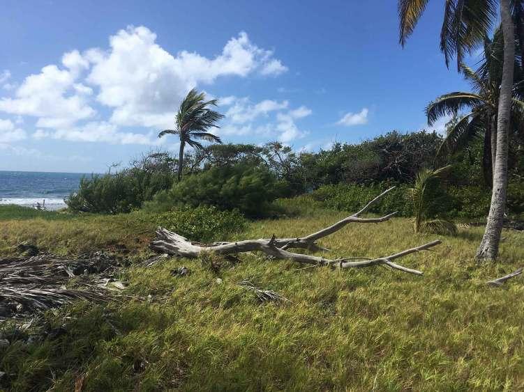 Cocotiers et végétation sur l'île de Petit Tabac.