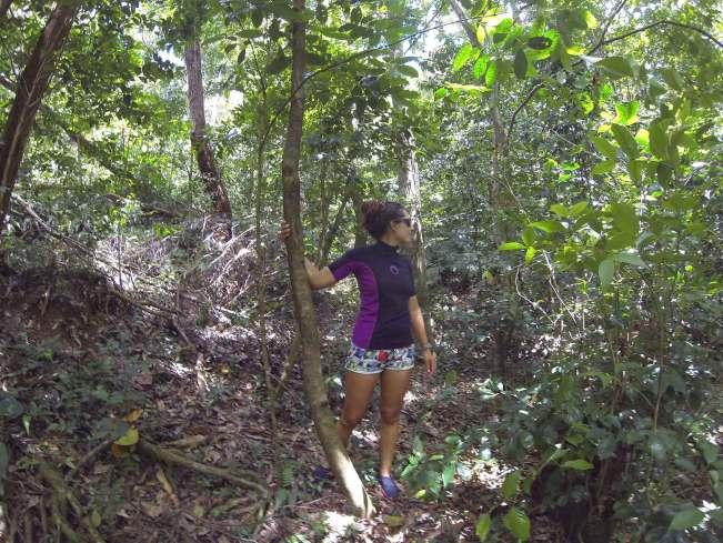 Au coeur de la forêt autour du Saut d'Acomat en Guadeloupe.