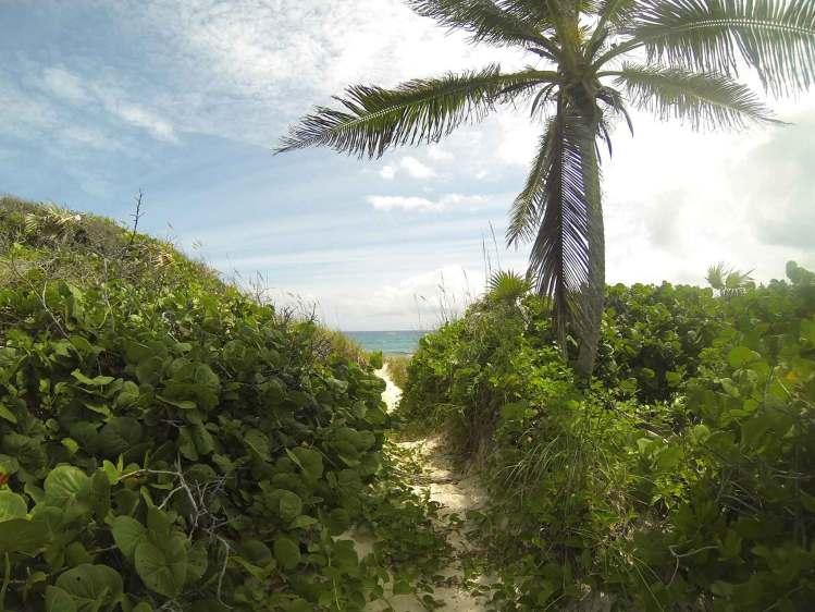 Petit trail dans la nature sur Stocking Island, aux Exumas, Bahamas.