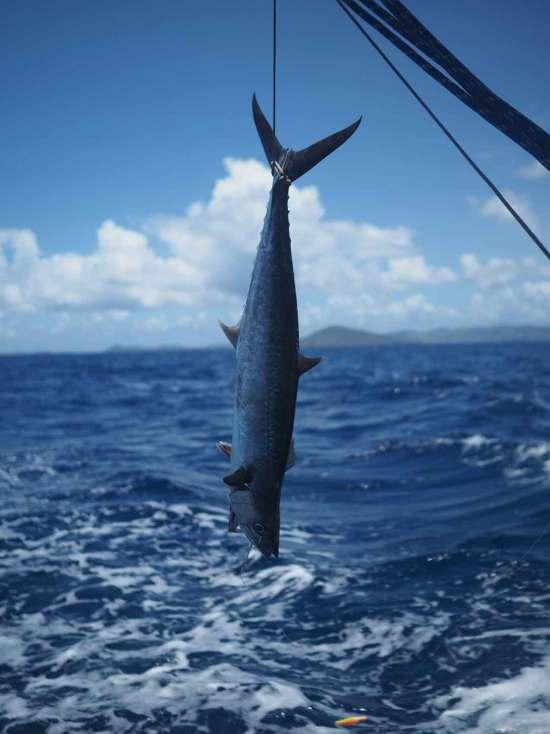Thazar pêché entre les BVI et les Bahamas.