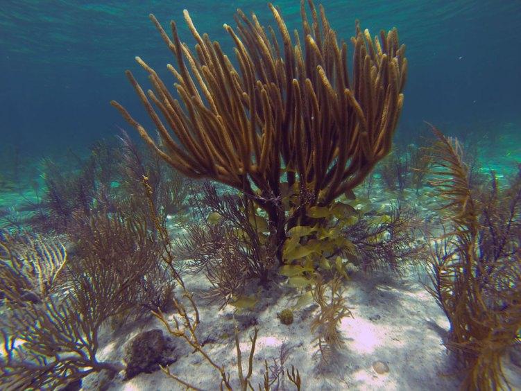 Magnifique fond sous-marin aux Berry Islands, aux Bahamas.