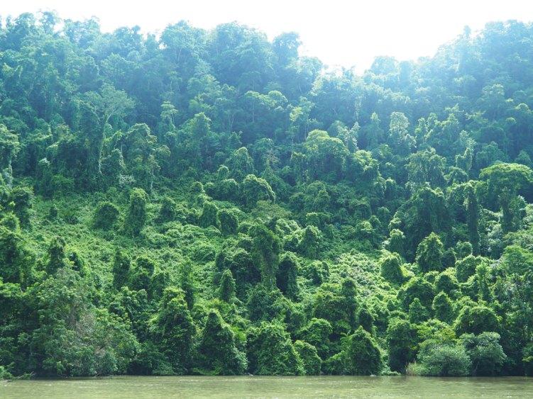 La végétation luxuriante sur les rives du Rio Dulce, au Guatemala.