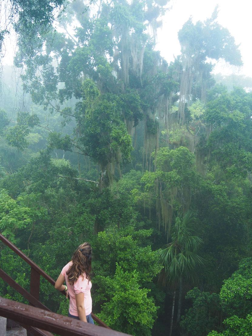 Végétation dense à Tikal, autour des ruines mayas.