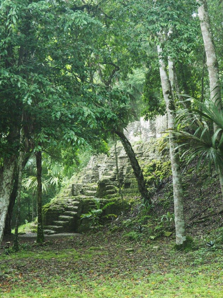 Ruines mayas cachées dans la jungle à Tikal, au Guatemala.
