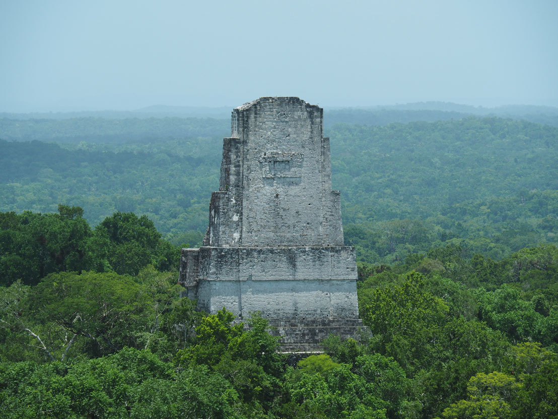 Temple maya au-dessus de la jungle à Tikal au Guatemala.