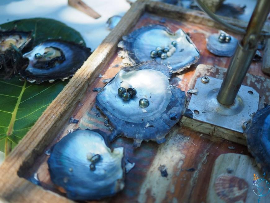 Des essais de perle de Tahiti dans la ferme perlière Hinano Pearls.