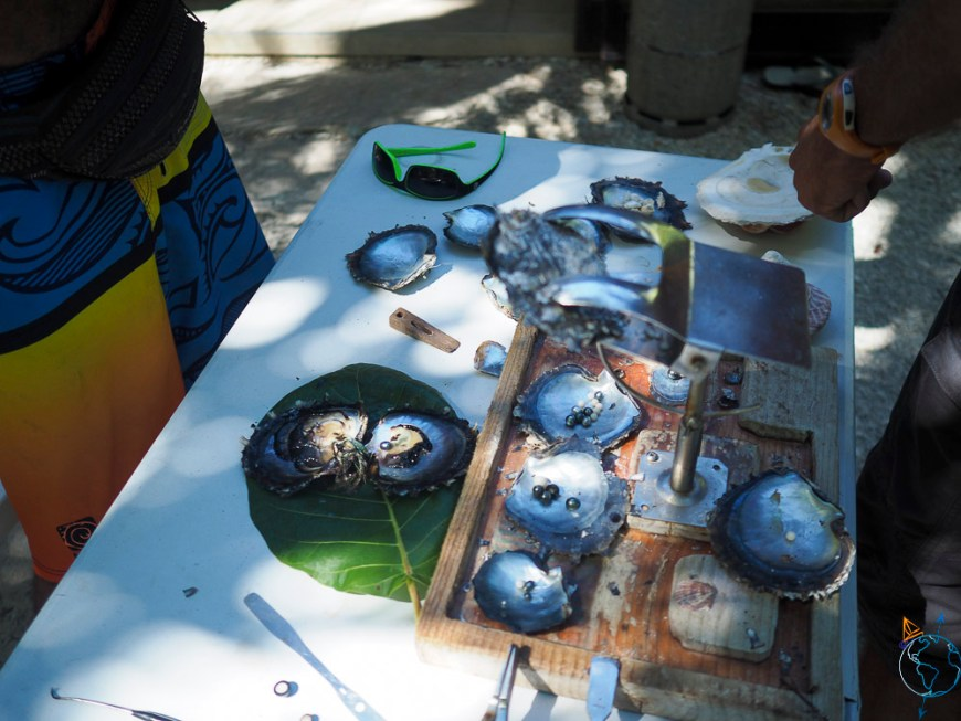 Explication de la fabrication des perles de Tahiti sur Fakarava.