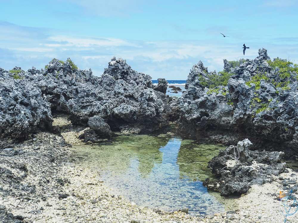 Mare d'eau de mer entre les récifs de Rangiroa.
