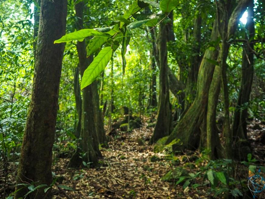 Balade dans la forêt tropicale de la vallée d'Opunohu.