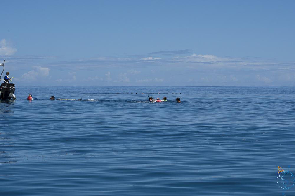 Groupes de mise à l'eau lors d'excursion baleines à bosse.