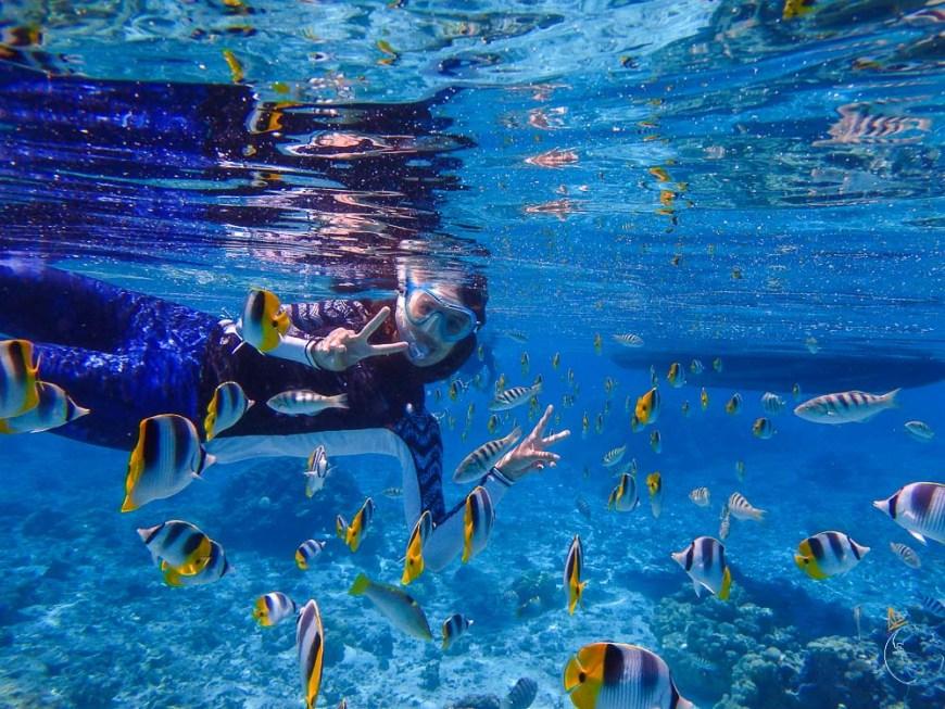 Snorkeling parmi les poissons papillons.