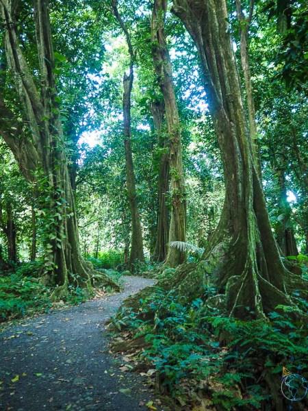 A l'ombre et sous la fraîcheur des arbres et de la mangrove.