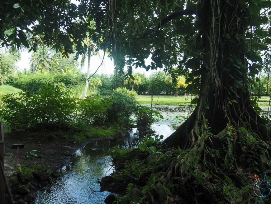 Bassins à l'ombre des arbres dans les jardins de Vaipahi.