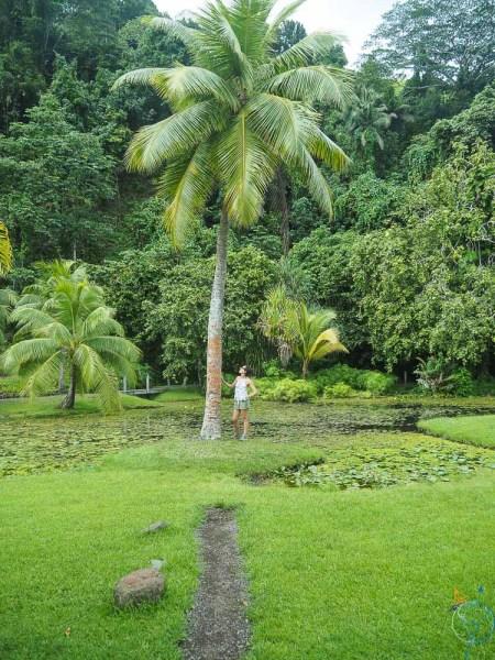 Palmier au beau milieu des jardins de Vaipahi sur la côte ouest de Tahiti.