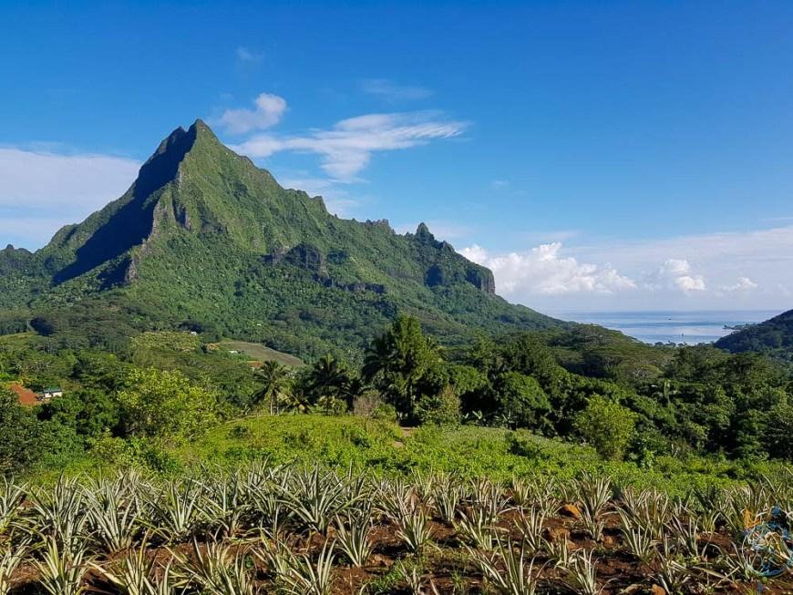 Le mont Rotui vu depuis les hauteurs de la baie de Cook.